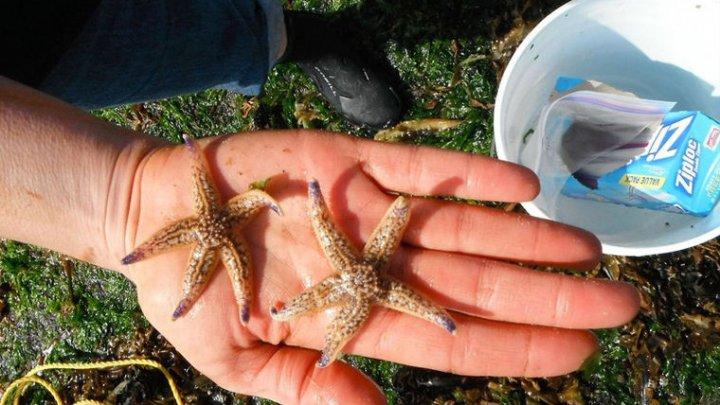 Ученые рассказали о путешествии 300 видов морских существ на мусоре из Японии
