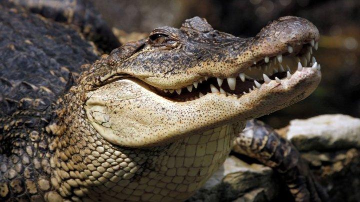 На Шри-Ланке нашли тело журналиста, на которого напал крокодил