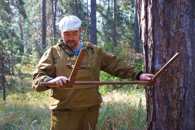 Деревья-долгожители в Тольятти