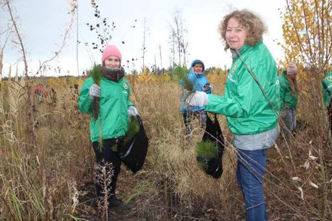 14 и 15 октября 2017 года в Тольятти активно сажали лес