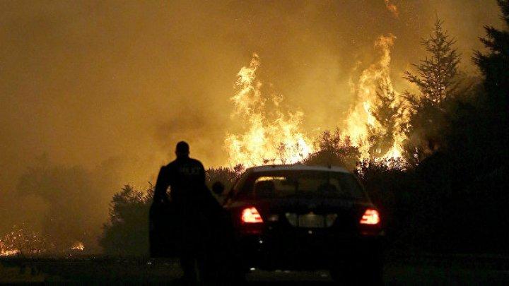 Лесные пожары в Португалии и Испании унесли жизнь 35 человек