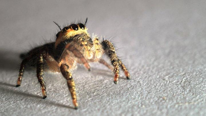 Пытавшийся истребить пауков паяльной лампой мужчина случайно сжег свой дом