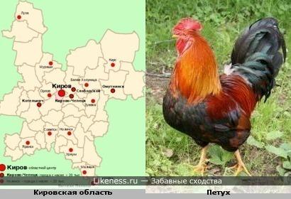 Жители Кировской области продолжают обсуждать скандальное высказывание Игоря Васильева об общипанной курице