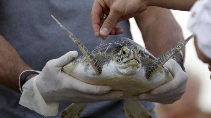 Прах ученого, спасавшего морских животных, отправили в океан на черепахе