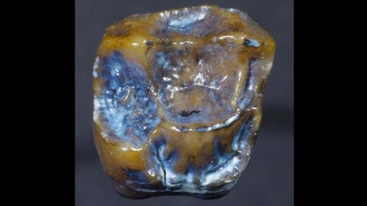 Найденные в Германии зубы нарушили представления об истории человечества