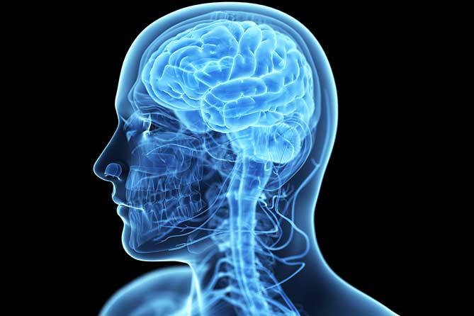 Что мы узнали о мозге за последние 120 лет