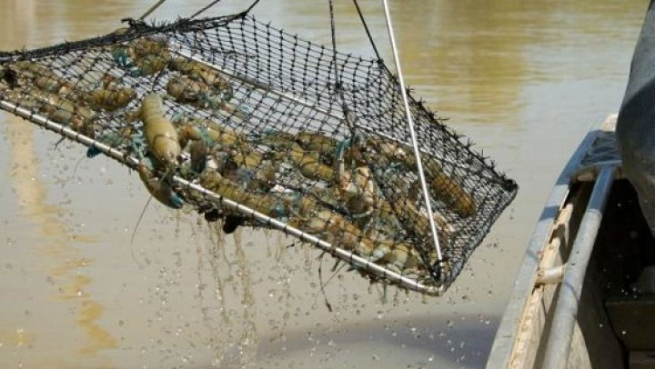 На Дубоссарском водохранилище и Днестре обнаружили более 200 ловушек для раков