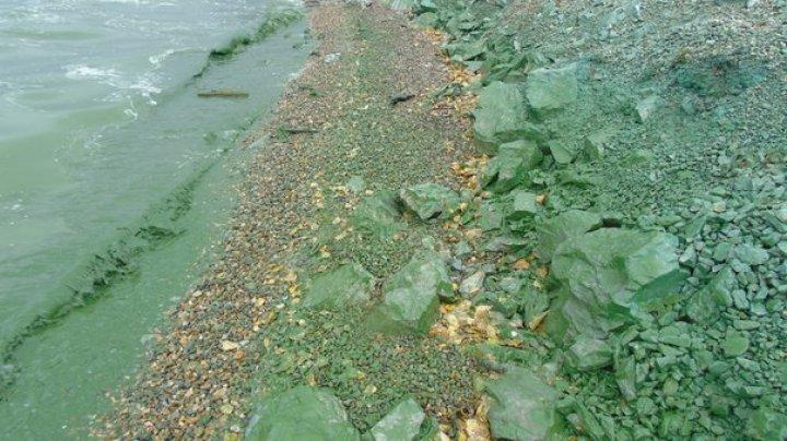 В Нижнем Тагиле водохранилище позеленело из-за химикатов: видео