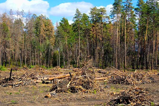 Тольяттинцы примут участие в уборке леса в Самаре