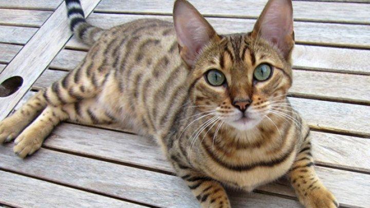 Выявлена польза от кошек для здоровья детей
