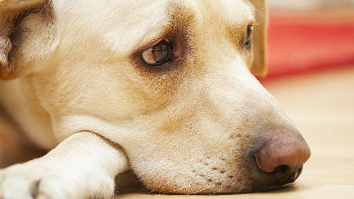 Уличный пес спас женщину от грабителя: видео
