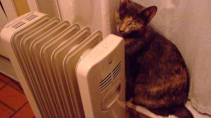 В Ярославле строительная фирма наняла котов-прорабов