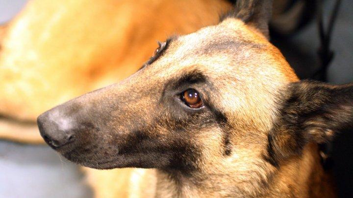 Собака награждена за мужество во время операции в Афганистане