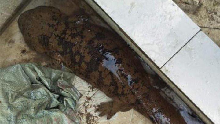 Китаянка обнаружила в канализации