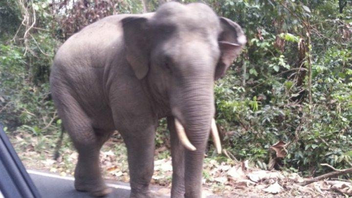 Смертельное фото: слон затоптал двух европейцев в Замбии
