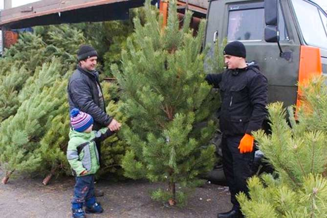 Продажа новогодних елок в Тольятти начнется 10 декабря 2017 года