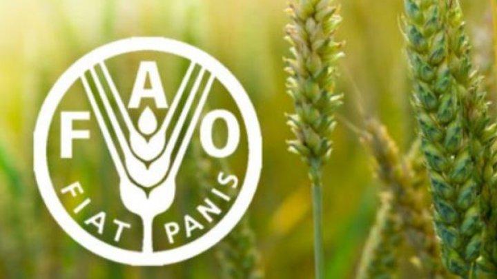 ФАО выделит Молдове 800 000 долларов на развитие сельхозсектора