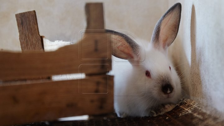 Отстрел зайцев в Молдове разрешен до 31 декабря 2017 года