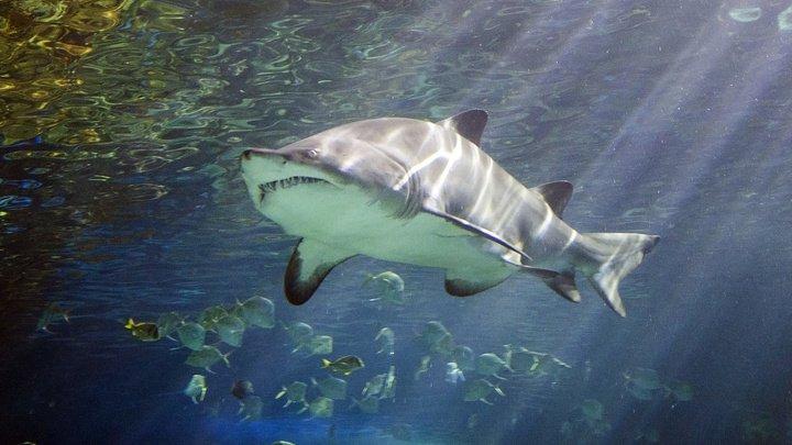 Серфингист отбился от напавшей на него акулы кулаками