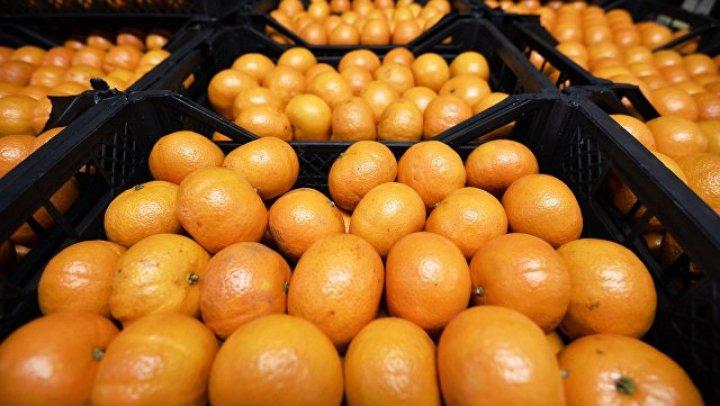 Полчища мраморных клопов уничтожили более 50% урожая мандаринов в Абхазии