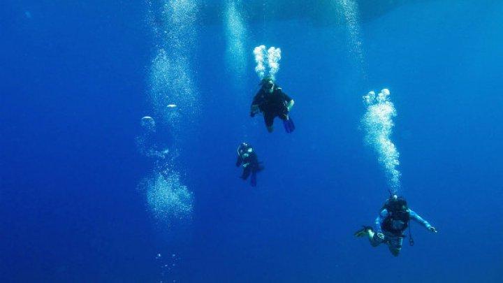 Самую глубоководную в мире рыбу сняли на видео