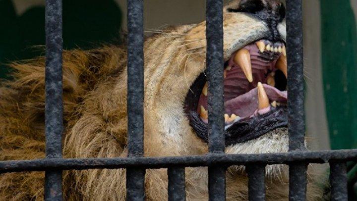 В Дании зоопарки просят приносить им домашних питомцев для корма львам