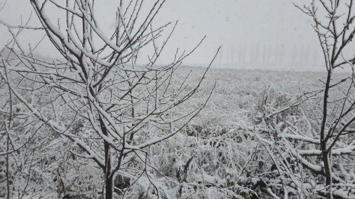 Праздник к нам приходит: жители Бричан и Окницы похвастались фотографиями снега