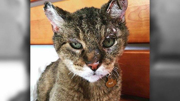 Пропавший 10 лет назад кот выжил в калифорнийских пожарах и вернулся к хозяйке