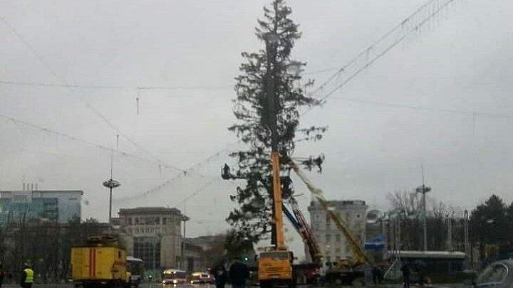 Украинская компания вернет потраченные деньги за поврежденную елку