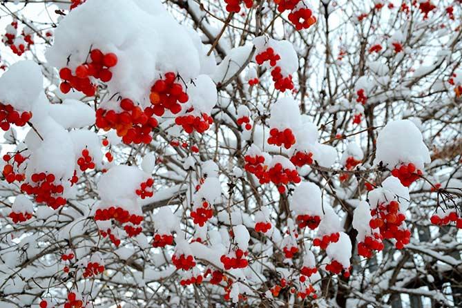 25 декабря: Солнце на лето, зима на мороз