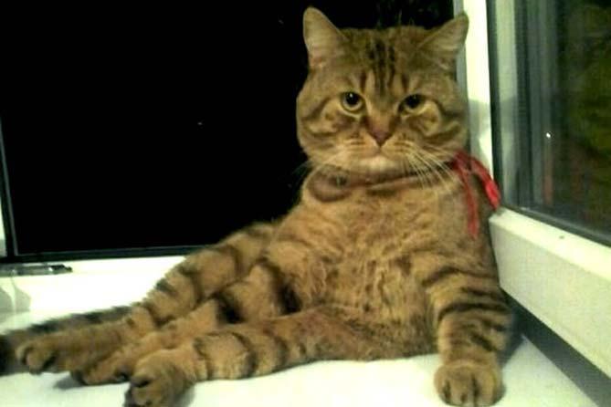 Чудо-кот за 29 миллионов рублей