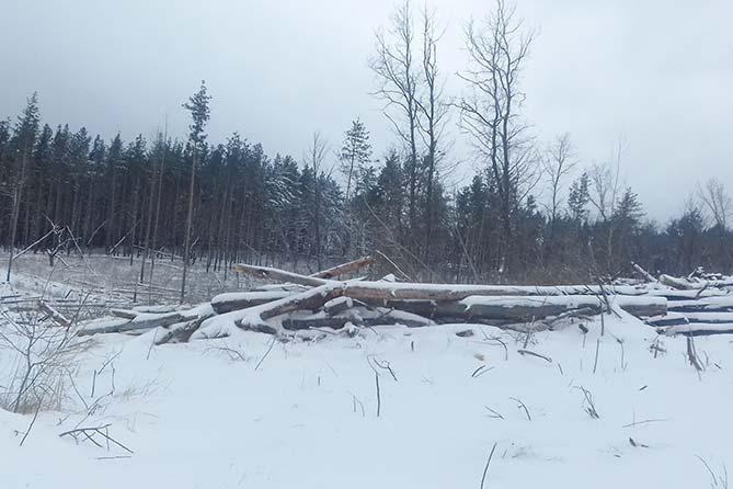 Тольяттинцам предлагают бесплатно неликвидную древесину из леса