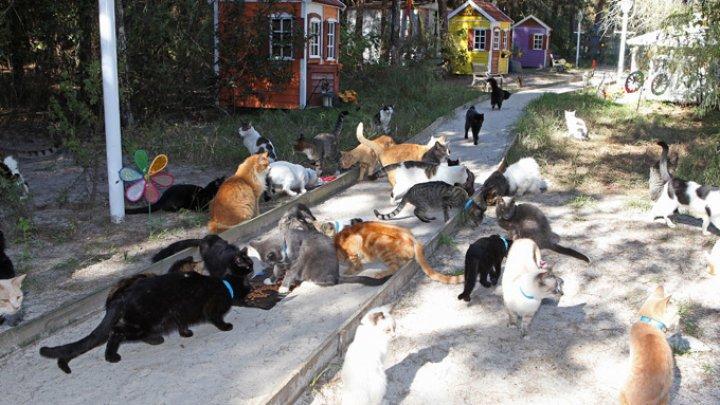 В Турции появится первая кошачья деревня