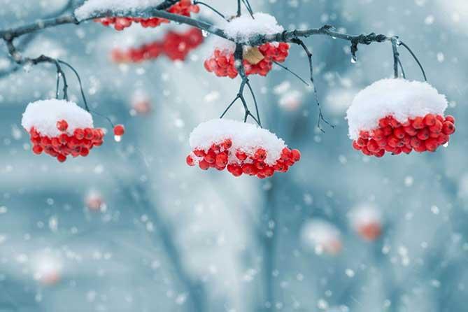 Погода в Тольятти с 12 по 15 декабря 2017 года