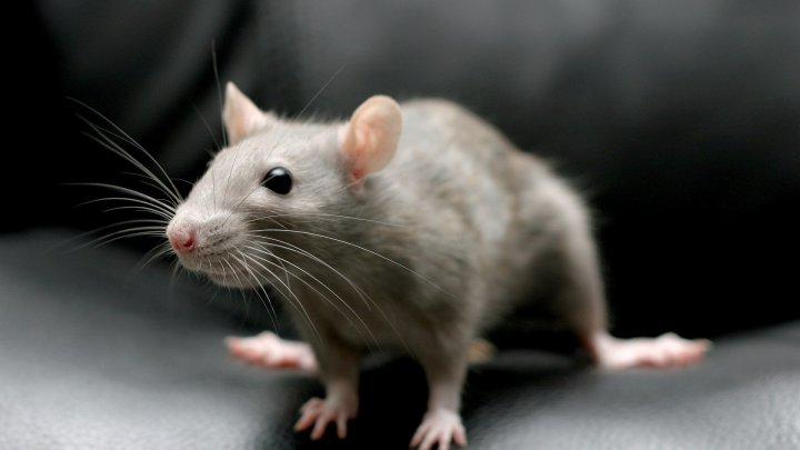 Авиарейс в Париж задержали на двое суток из-за мыши