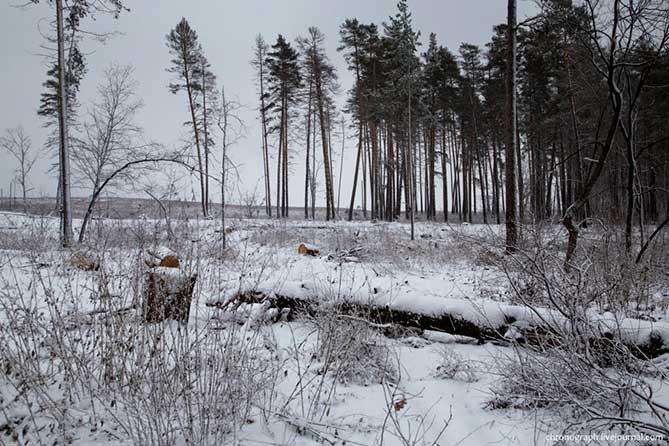 Строительство дороги через лес: Мнение горожан