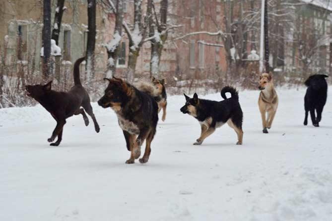 Отлов бродячих животных в Тольятти