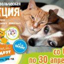 Акция по сбору корма для бездомных животных со 2 по 30 апреля 2018 года