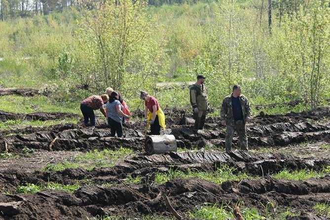 В 2018 году в Тольятти восстановят 100 гектаров леса
