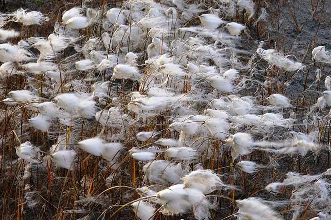 растительность Чукотки летом