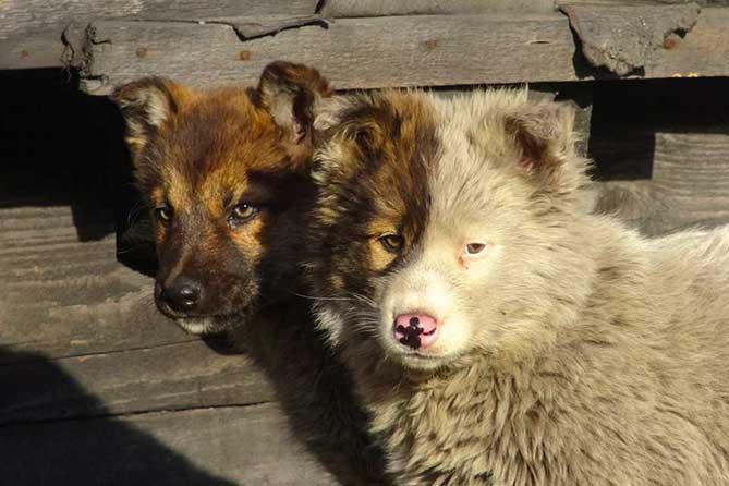 две собаки стоят у дома