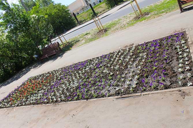 В Тольятти высажены новые клумбы