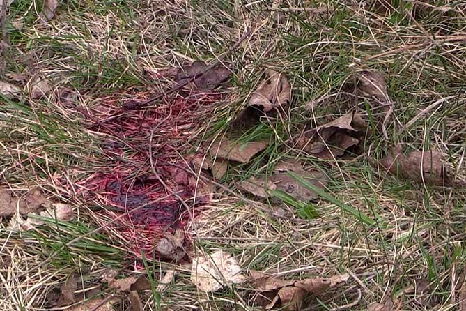 Инцидент произошел на улице Свердлова