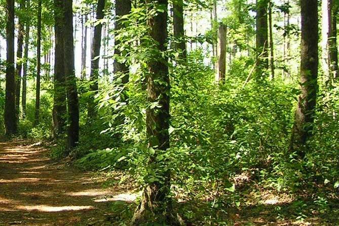 Тольяттинский лес: Планируют направить 47 миллионов рублей