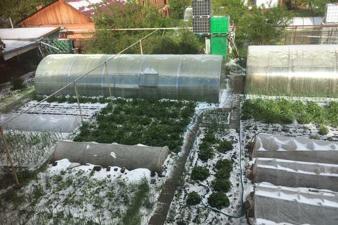 дачный участок с растениями в снегу 1 июня