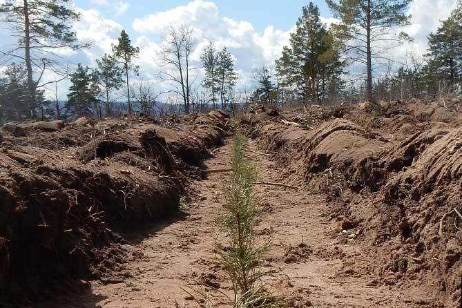 Финансируют наши посадки леса сами горожане
