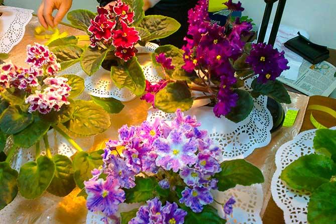 Выставка комнатных и садовых растений 9 и 10 июня 2018 года в Тольятти