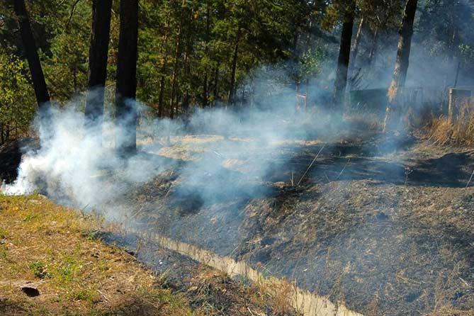 В тольяттинских лесах удалось избежать крупных пожаров