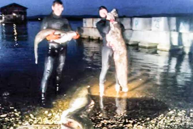Рыбка весом в 65 килограмм