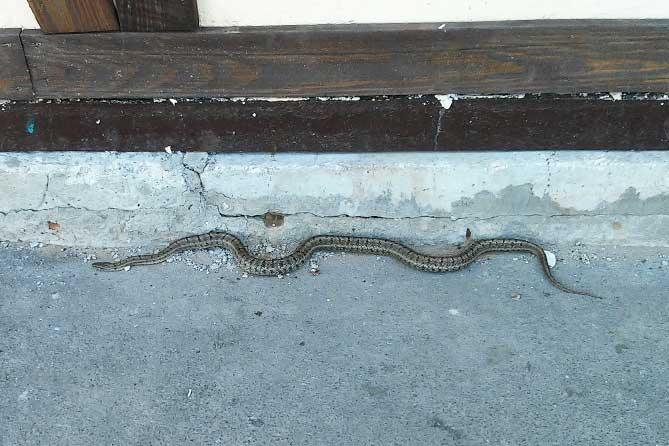 В Тольятти на остановку выползла змея